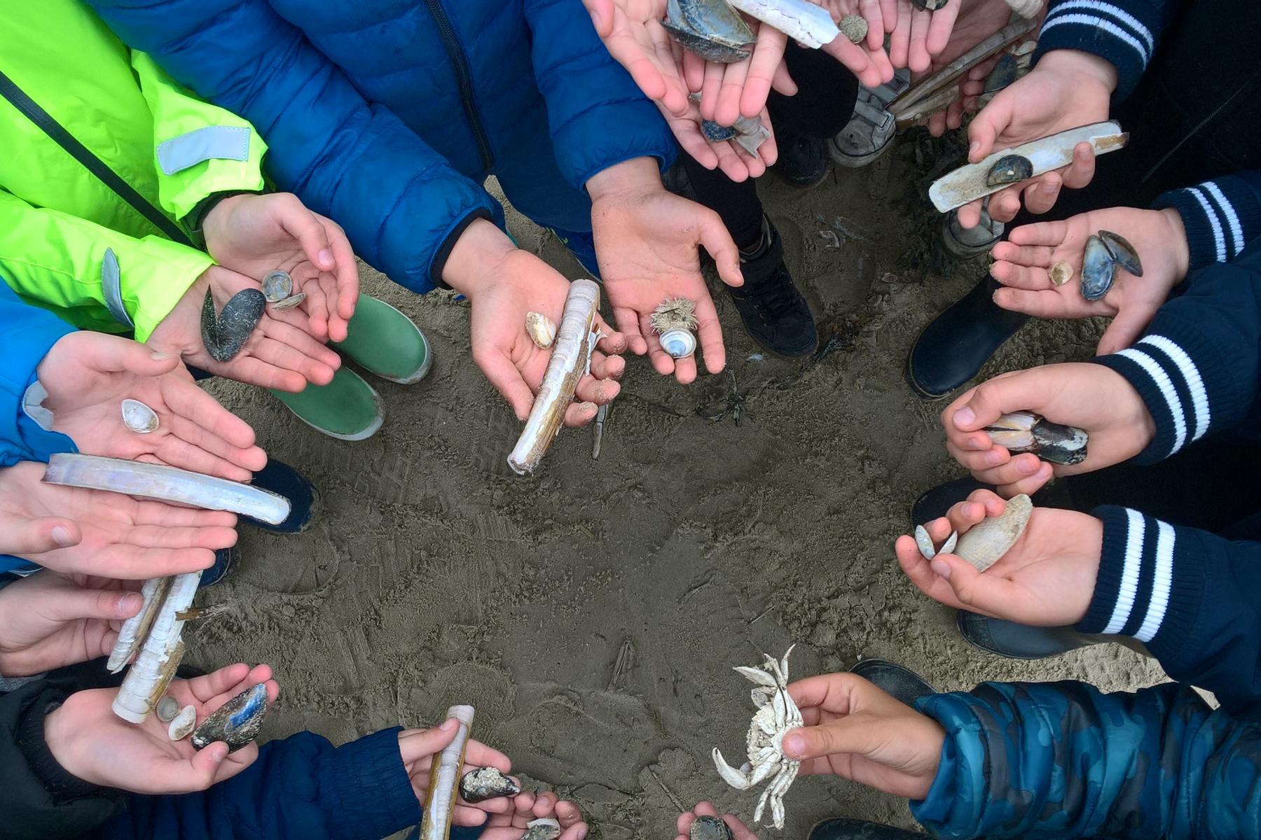 Visit Nieuwpoort Strand- en schelpenwandeling