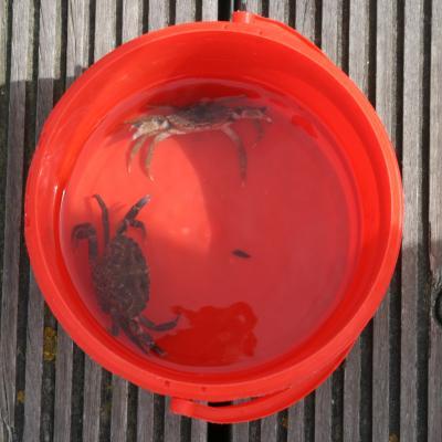 Visit Nieuwpoort - Krabbenvangen