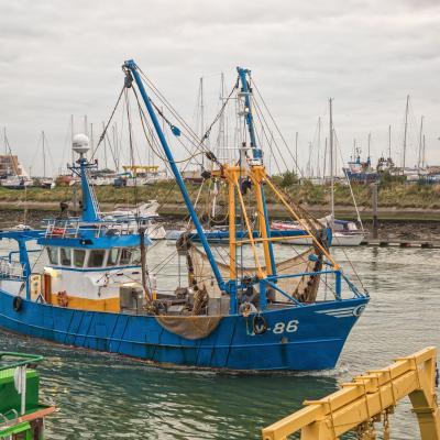 Visit-Nieuwpoort The fish auction