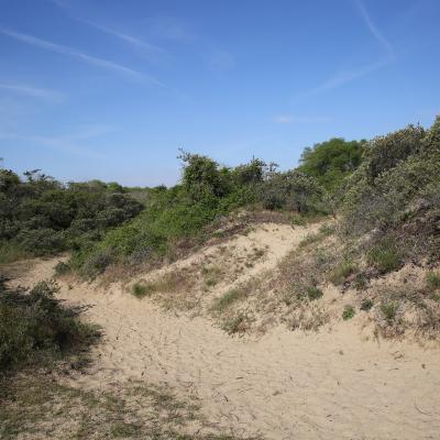 Visit Nieuwpoort Natuurexploratie van de duinen
