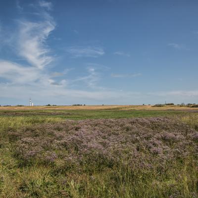 Visit-Nieuwpoort La réserve naturelle De IJzermonding