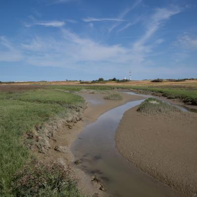VisitNieuwpoort Naturreservat De IJzermonding
