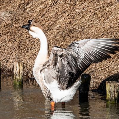 Visit Nieuwpoort - Werelddierendag